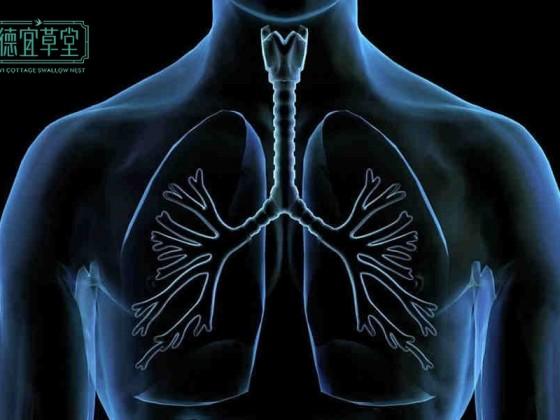 燕窝对肺的功效和作用