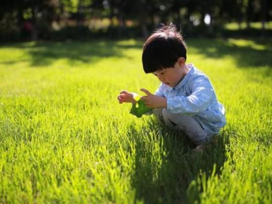 六岁孩子能天天吃燕窝吗