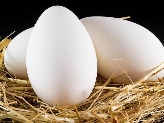 怀孕可以吃什么煮鹅蛋