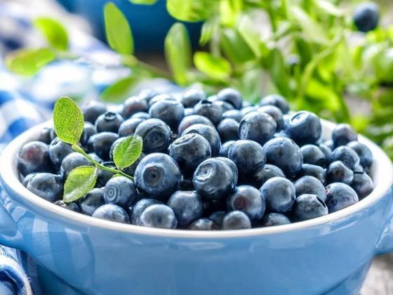 孕妇吃蓝莓炖燕窝的好处