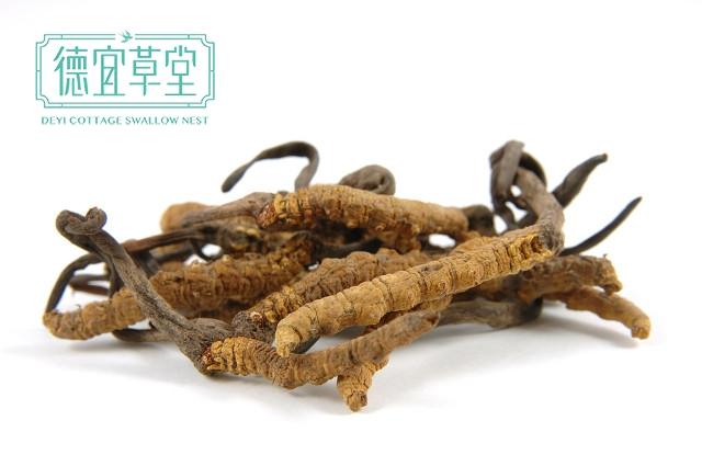 虫草和燕窝可以一起服用?虫草和燕窝有什么功效?