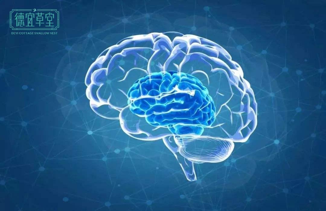 燕窝提高儿童智力和记忆力、预防老年痴呆的依据