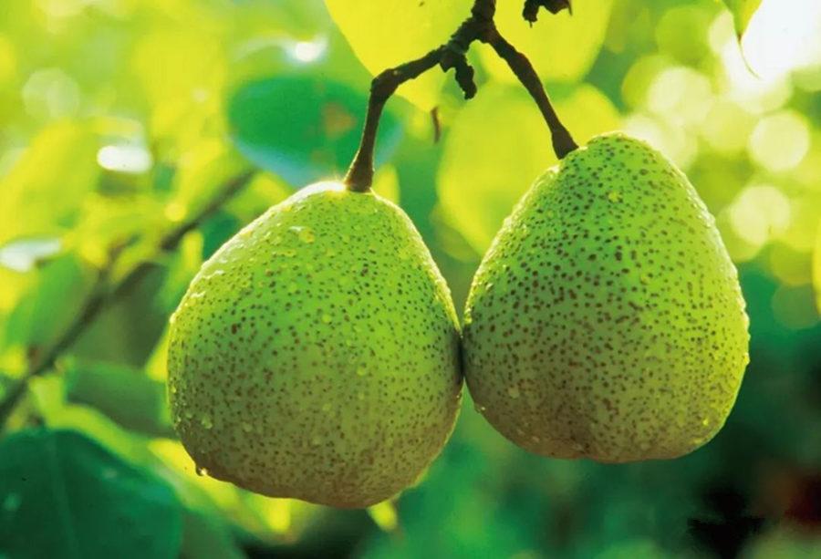 孕妇吃什么水果补钙