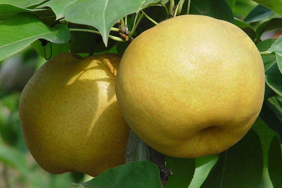 怀孕了吃什么水果好