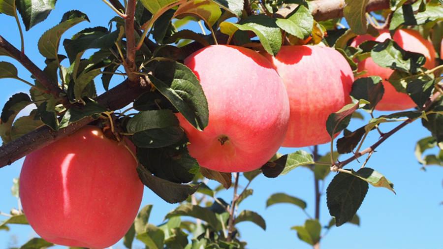 怀孕胃寒能吃什么水果