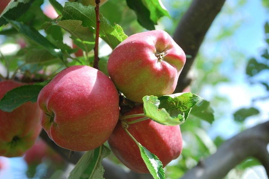 孕妇吃什么水果祛斑美白