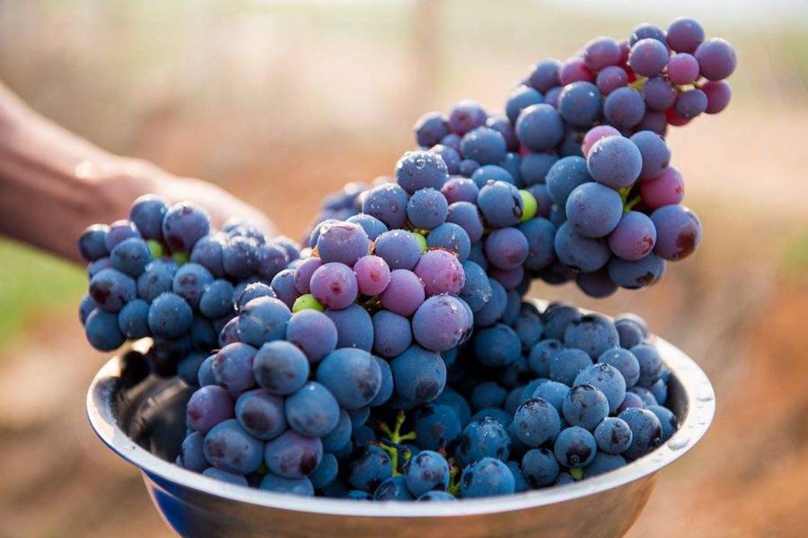 在怀孕的初期可以吃葡萄吗