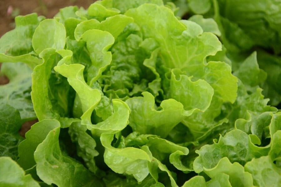 孕妇冬天能吃什么蔬菜