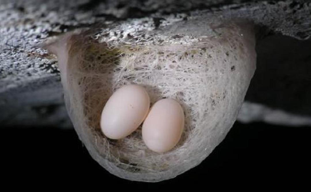燕窝原始图片